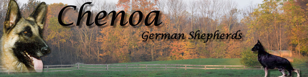 Chenoa German Shepherd Dogs and German Shepherd Puppies